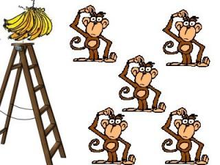Macacos experimentais.